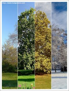 nice Seasons / Évszakok