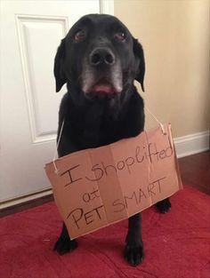 Attack of funny dogs.–12 Pics--funny dog shaming: I shoplifted at PET Smart
