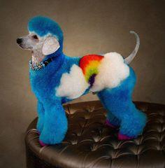 color dyed dogs | ... - Complaints Help: Purebred Breeders: Dye/Paint your Dogs Hair