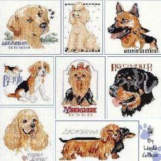 allemaal honden