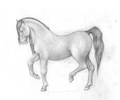 paarden tekenen stap voor stap - Google Search