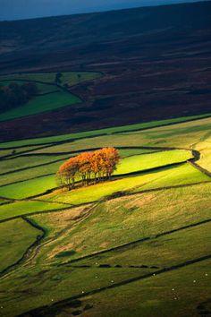 Twenty trees in Derbyshire in Autumn. Peak District National park. UK
