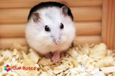 6 mascotas pequeñas perfectas para ti