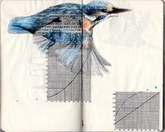 bird sketchbook for the 2011 Sketchbook Project