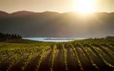 lake chelan wineries - - Yahoo Image Search Results