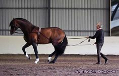 Manolo Mendez & Your Horse's Topline