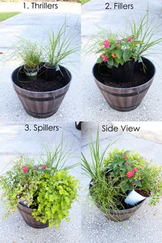 Container Plants, Container Gardening, Gardening Tips, Organic Gardening, Container Flowers, Vegetable Gardening, Succulent Containers, Container Design, Patio Plants