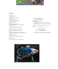 Archived Auction # - Blue Fancy Hmpk Male - Ended: Mon Aug 12 2013 Halfmoon Betta, Fancy, Auction, 21st, Wedding, Copper, Blue, Valentines Day Weddings, Brass