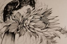 """Check out this @Behance project: """"Kalao and Protea."""" https://www.behance.net/gallery/43136517/Kalao-and-Protea"""