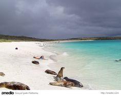 Bahia Gardner Plajı - İspanya