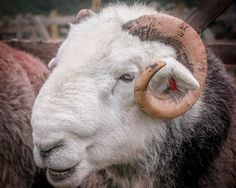 Herdy-May you grow in wisdom and knowledge as you do years