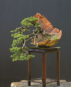 Beautiful natural stone bowl tray. Kengai hanging cascade syle bonsai. Walter Pall Bonsai.