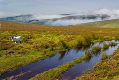 Galtee Mountain range, Ireland's highest inland mountain range. The highest peak is Galtymore which stands at 3009 ft Connemara, Mountain Trails, Mountain Range, Irish Store, Nature Sauvage, Site Archéologique, Erin Go Bragh, Walking Routes, Most Beautiful Images