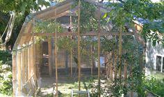 building an outdoor aviary for parrots Bird House Kits, Bird Aviary, How To Attract Birds, Bird Cages, Backyard Birds, Bird Toys, Hobby Farms, Farm Yard, Budgies