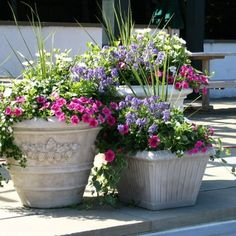 ideas for flowers in pots - Google Search