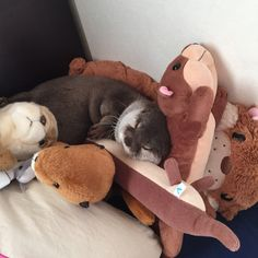 An otter sleeping with stuffed  otters doubling their otterness ^_^