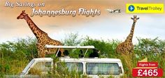 Travel Trolley introduces glorious deals and discounts on all flights to Johannesburg. Call our travel experts today Safari Game, Giraffe Photos, Travel Trolleys, All Flights, Kenya Travel, Mount Kilimanjaro, Evergreen Forest, Luxury Tents, Vacation Deals