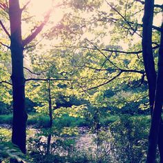 light shines through the woods, green and water in Kelvingrove Park by @ijusty