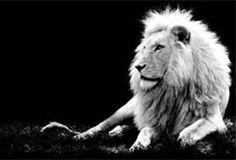black and white animal photo - Bing Images