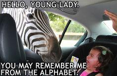 #Haha #LOL #Zebra #Baby #Funny