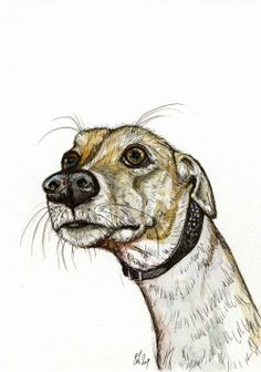 Greyhound Prints - Bing Images