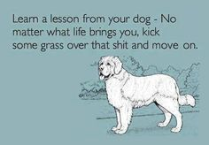 Ha! And I don't even have a pet dog