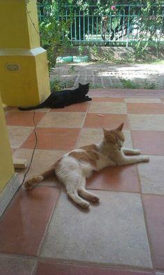 Los gatitos en costa rica