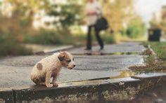 Ivantey: Abandoned, Alone, Hungry, Wet