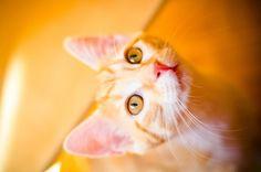 smoky #cat #fotografie