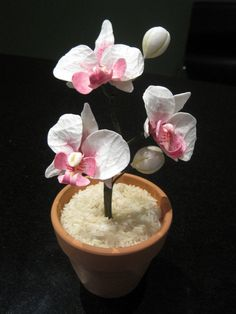 Hand made gum paste Phalaenopsis Orchids.