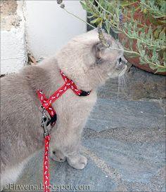 Journal d'un chat : les aventures d'Eirwena: Rencontre surprise
