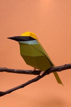Arabian birds at KAUST