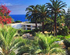 Monaco World Peace, Monaco, Around The Worlds, Plants, Photography, Photograph, Fotografie, Photoshoot, Plant