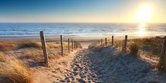 Path to North sea beach in gold sunshine. Path to North sea beach in gold sunset , Beach Canvas, Beach Wall Art, Beach Pictures, Print Pictures, Plage Art Mural, North Sea, Modern Landscaping, Beach Scenes, Beach Landscape