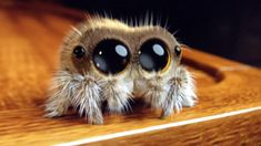 Lucas the Cute Little Spider: It's Cold Outside - CutesyPooh