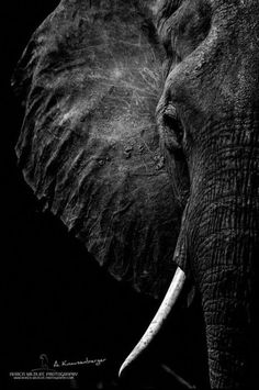 Elephant…in the colors of a stormy sea. Image Elephant, Elephant Love, Elephant Art, African Elephant, African Animals, Elephant Pictures, Elephants Photos, Animal Pictures, Elephant Photography