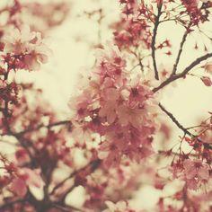 flowers by liz rusby