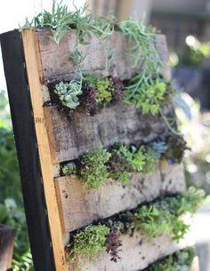 vertical garden: pallet backed with garden membrane.