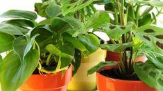 IDEA 2011 -kilpailun voittaja: Huvimaja vanhoista hirsistä Plants, Plant, Planets