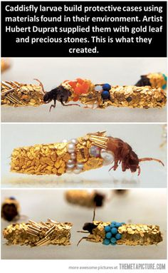 The bejeweled bugs of Hubert Duprat…