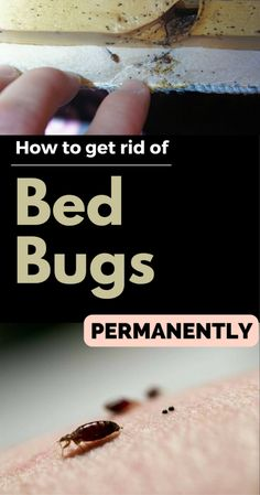 diy how to get rid of bed bugs yourself by larry kilmer ebook deal recent ebook deals free. Black Bedroom Furniture Sets. Home Design Ideas