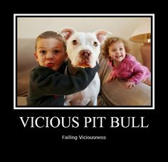 #ViciousFail #PitBull See more & submit your own at www.facebook.com/pitbullsagainstmisinformation