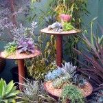 Very cool way to display succulents so they're noticeable.  I like just about everything on this website.