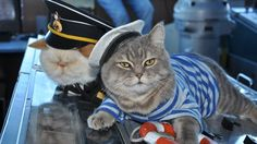 Meet the cat captain and first mouser of your Russian river cruise The very intelligent business people at VODOHOD River Cruises have hired two cats to oversee operations on their Nikolay Chernishevsky cruise ship.