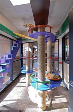 humane society cat play room - Yahoo Image Search Results - Dani Whipple -cutest humane society cat play room - Yahoo Image Search Results - Dani Whipple - This furniture is purrrfect for cats! How to Make a Cat Condo