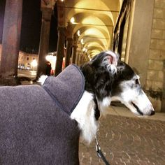 Winter is leaving... God knows where... #borzoi #AskAzu