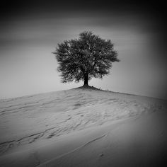 Bogdan Panait Photography