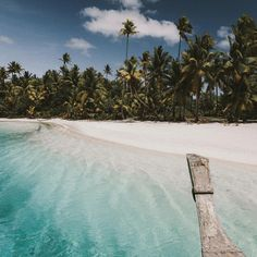 https://www.instagram.com/lifenow.rocks/ >>>>Tag your friends<<<<<  lifenow.rocks All about those tropical feeels  . . . . . . . . . . VIA@gypsea_lust #beachbody #travelusa #californication #destinosesonhos #igerscalifornia #westcoast #likeforlikethanks #igerssanfrancisco #igersnetherlands #traveldeeper #igersusa #men #europe_gallery #프랑스 #workout #nationalaviationday #pilots #hobilerim #cityscape #holiday #abbotkinney #loves_europe #work #cherish