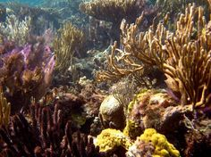 Ambergris Caye, Belize: Lighthouse Reef coral at the Blue Hole