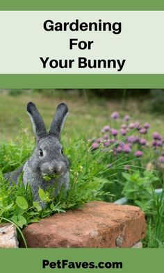 Have you ever thought about growing your bunny's vegetables? Even with just a little space you can grow greens and more. Find out how you can garden for your bunny. Gardening For Pets Meat Rabbits, Raising Rabbits, Cute Bunny, Bunny Rabbit, Bunny Cages, Rabbit Cages, Rabbit Garden, Rabbit Breeds, Indoor Pets